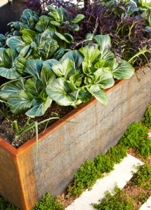 raised bed veggies