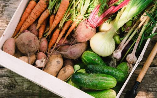 Small Plot Organic Gardening