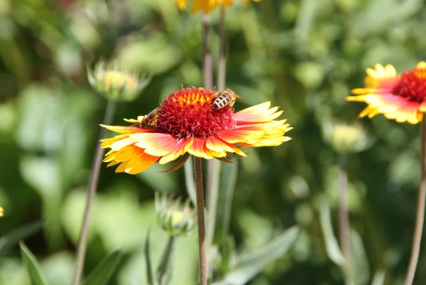 How to Plant & Design a Pollinator Garden