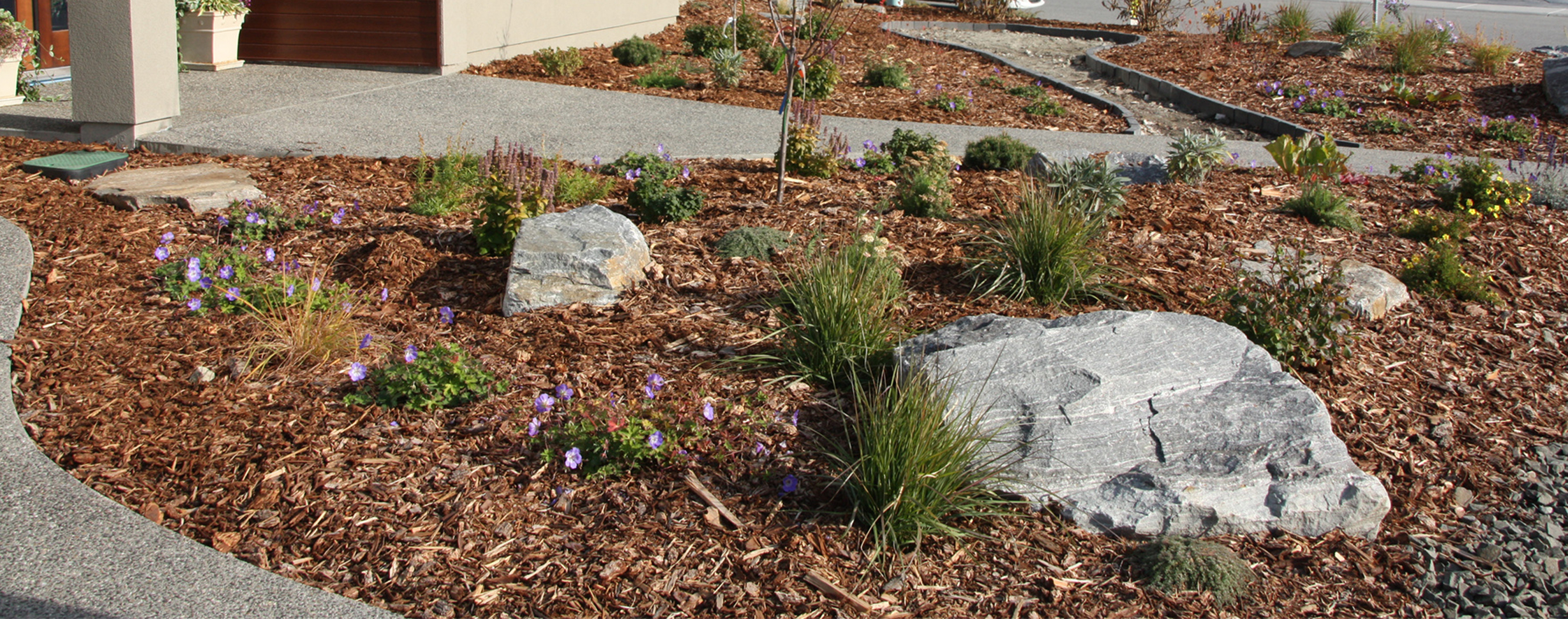 Newly planted edible & bee-friendly landscape