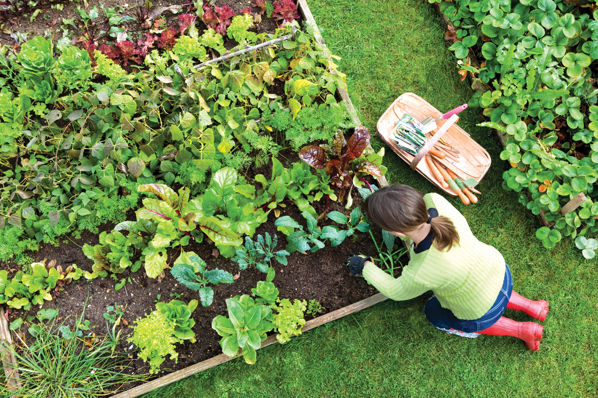 Okanagan-Specific Tips for Seed-sowing & Transplanting Plants