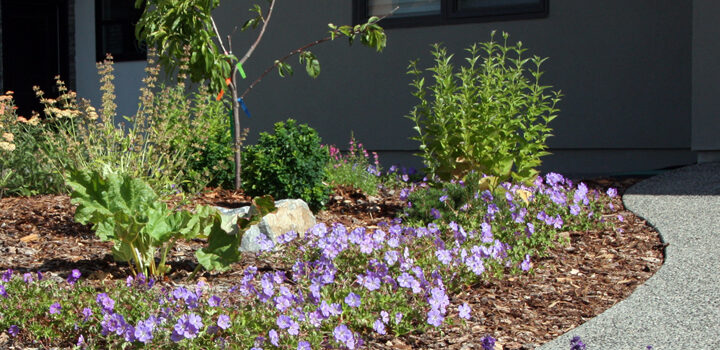 Edible & Pollinator-friendly Front Yard