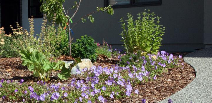 Edible & Pollinator-friendly Front Yard