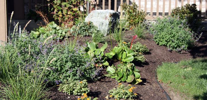 Garden Bounty with Ornamental Beauty