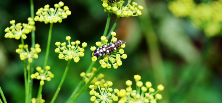 How to Attract Beneficial Insects to Support Your Food Garden